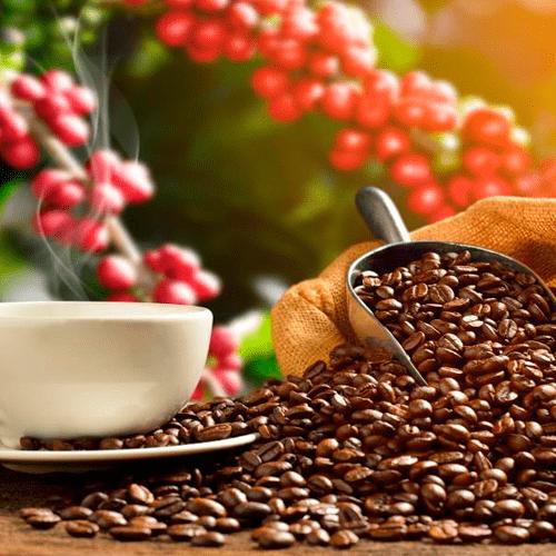 Ruta Del Café & Cacao 2d / 1n
